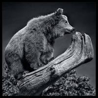 Fearless in B/W by KeldBach