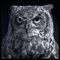 Eagle Owl Portrait in B/W by KeldBach