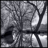 Bare Willows in B/W by KeldBach