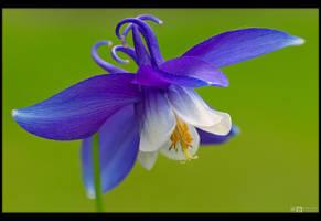 Blue Wings by KeldBach
