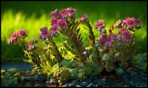 Cobweb Blooms ad Libitum