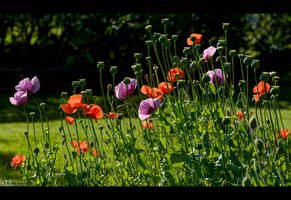 The Joy of Summer by KeldBach