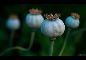 Poppy Pods by KeldBach