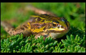 Freddie the Frog by KeldBach