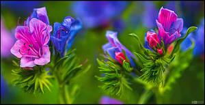 Blooming Blueweed