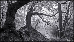 Gnarly Roots in B/W by KeldBach