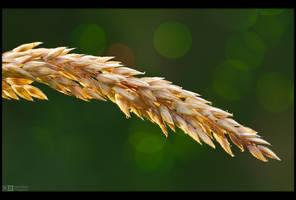 A Simple Grass Straw by KeldBach