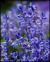 Bluebell Invasion by KeldBach