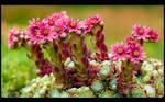 Blooming Cobweb by KeldBach