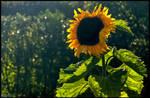 Come Sunshine
