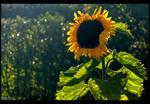 Come Sunshine by KeldBach