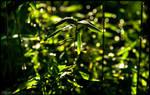 Bamboo Glitter