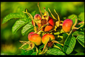 Almost Ripe by KeldBach