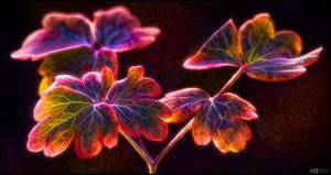 Flaming Aquilegia Leaves