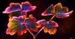 Flaming Aquilegia Leaves by KeldBach