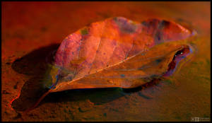 Autumn, One Leaf at the Time by KeldBach