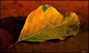 Autumn, One Leaf at the Time