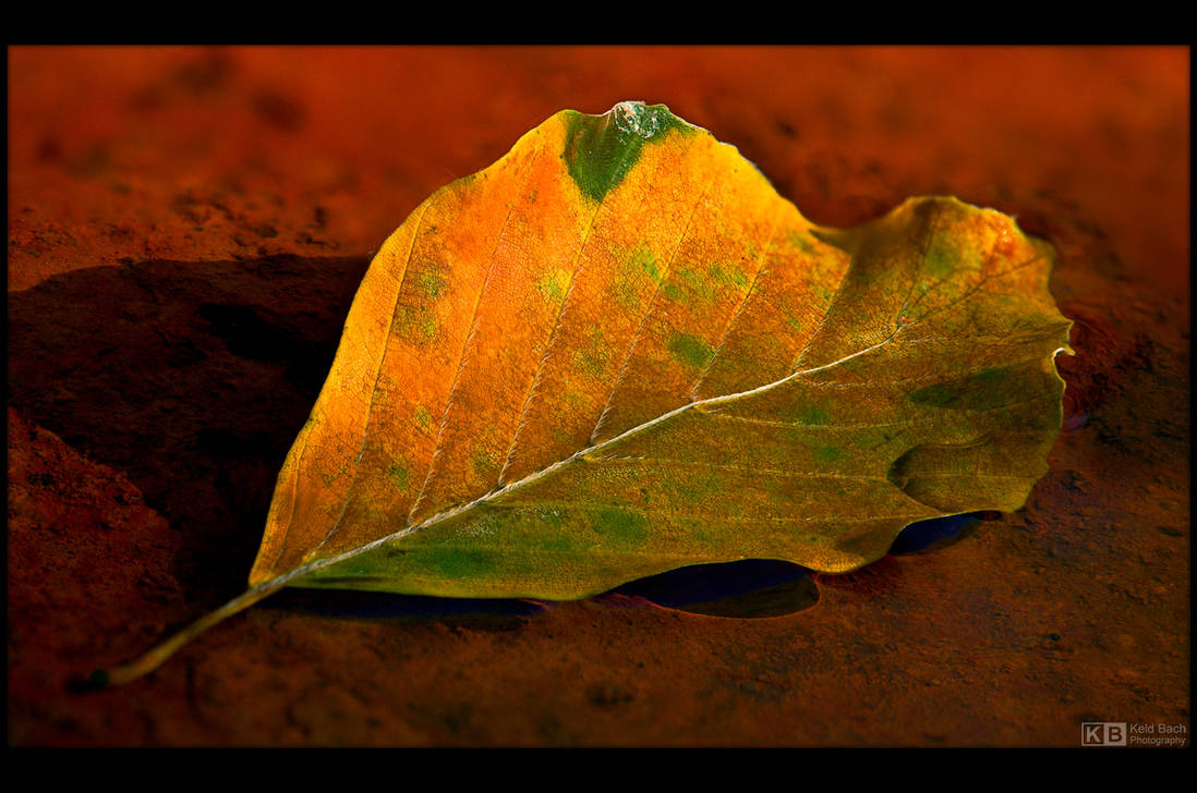 Autumn, One Leaf at the Time 2 by KeldBach