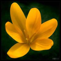 All Yellow by KeldBach