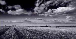 Stubble Field in Mono