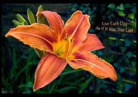 The Wisdom of a Daylily by KeldBach
