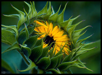 Eye of the Sun by KeldBach
