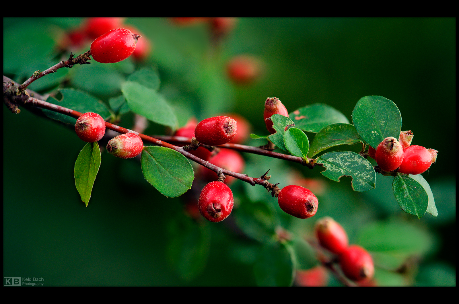 Autumn is Nearing by KeldBach