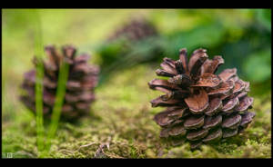 Still Life with Cones by KeldBach