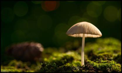 Tiny Shroom