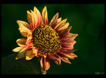 Sun Seeker by KeldBach