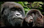 Capitalism is Killing the World's Wildlife by KeldBach