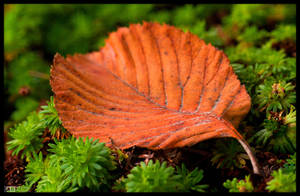 Autumn, One Leaf at the Time 3 by KeldBach