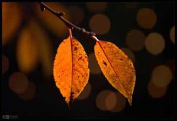 Golden Cherry Leaves by KeldBach