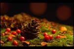 Warm Autumn by KeldBach