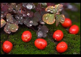 Wet Autumn by KeldBach