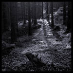 Just Follow the Light in Mono