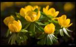 Yellow Invasion by KeldBach