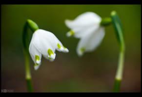 Snowbells by KeldBach