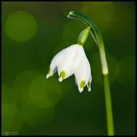 A Simple Spring Snowflake by KeldBach