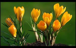 Golden Bulbs by KeldBach