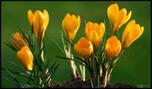 Golden Bulbs by KeldBach