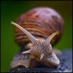 Rain is a Snail's Best Friend by KeldBach