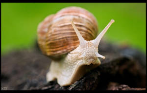 Rain is a Snail's Best Friend by KeldBach