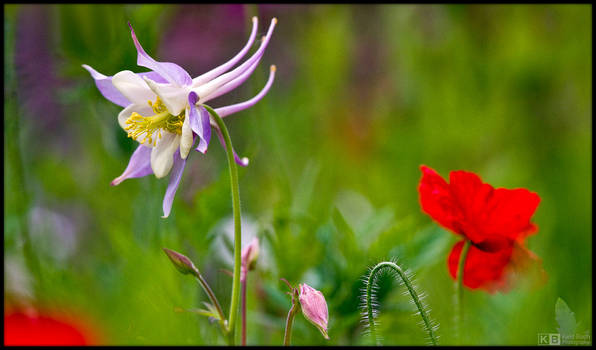 Springtime in the Wild Corner by KeldBach