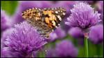 Butterfly Invasion by KeldBach