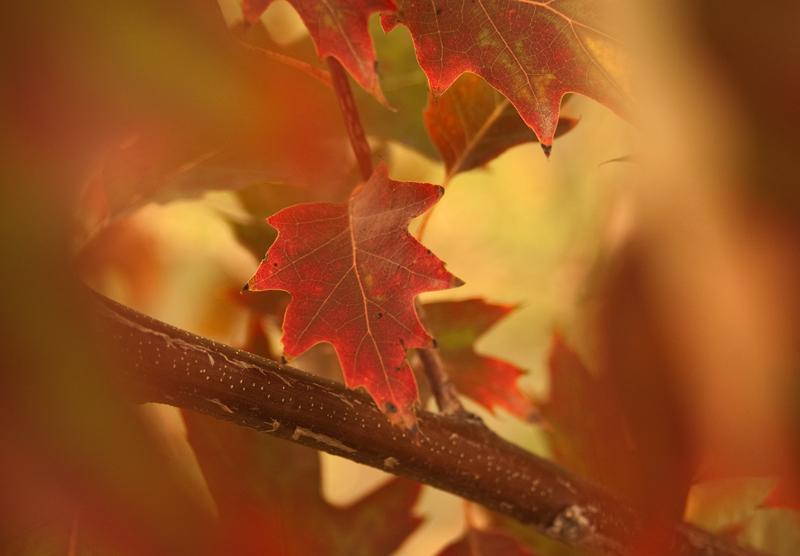 Fall by june-june