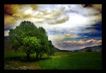 A Tree in a Field by mutos