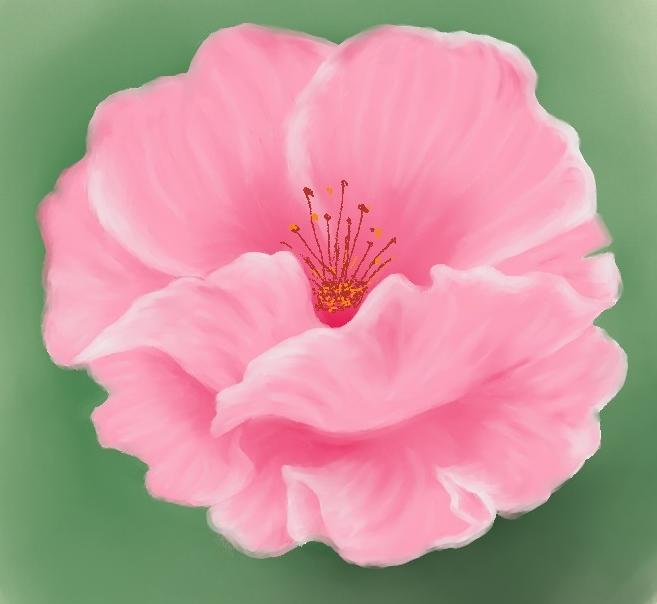 Pretty pink flower by Firija on DeviantArt