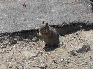 Squirrel eating dorritos