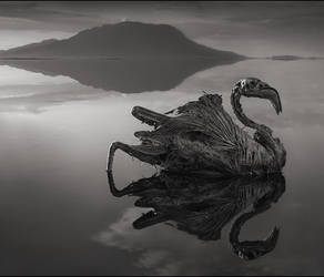 (Nick Brandt 1 by Agnija-a